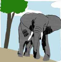 elephant-graphic